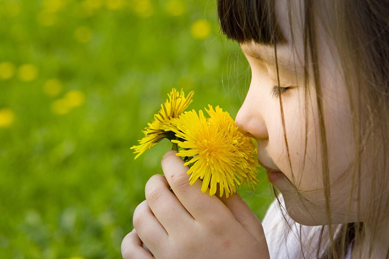 Картинки девочка Дети Цветы Одуванчики Девочки ребёнок цветок
