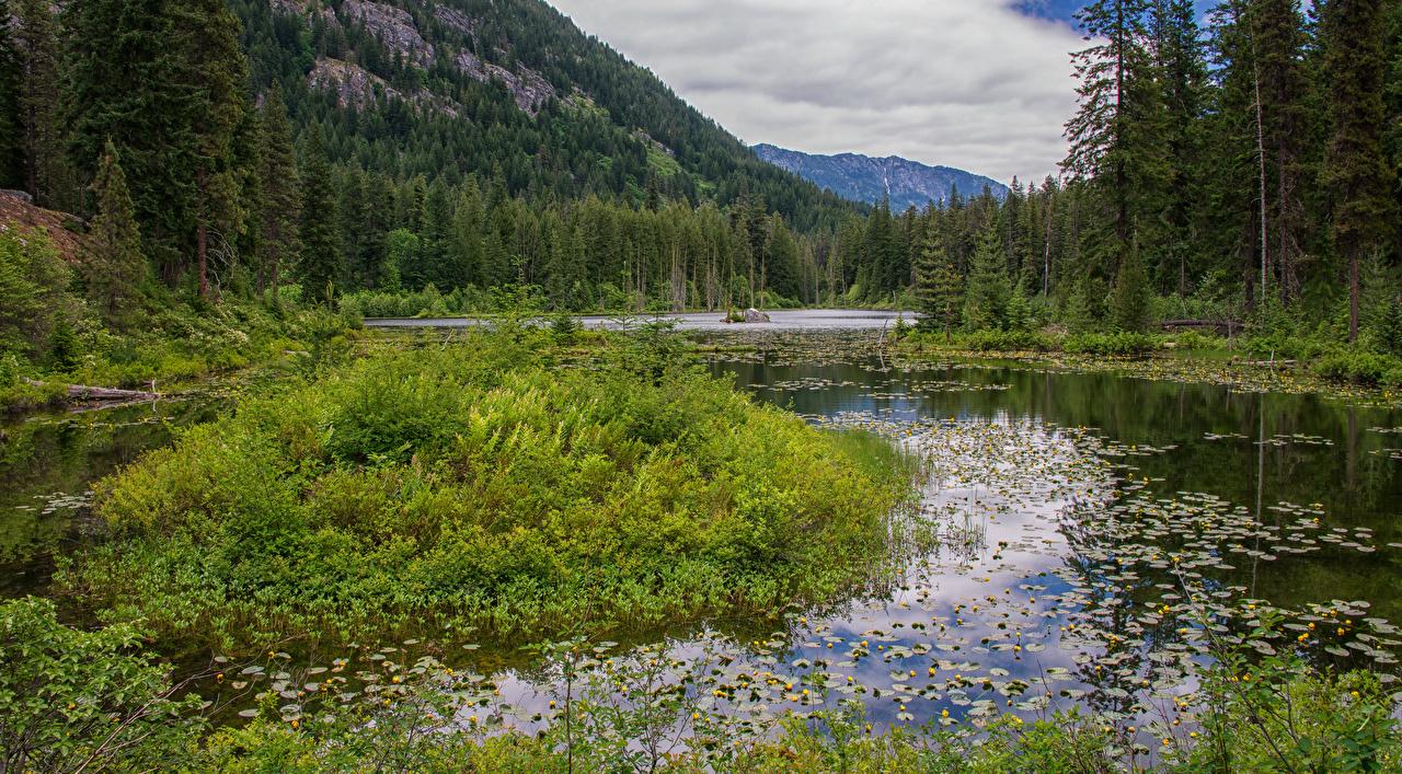 Фото штаты Howard Lake North Cascades National Park Природа Леса Озеро Парки Водяные лилии США Кувшинки