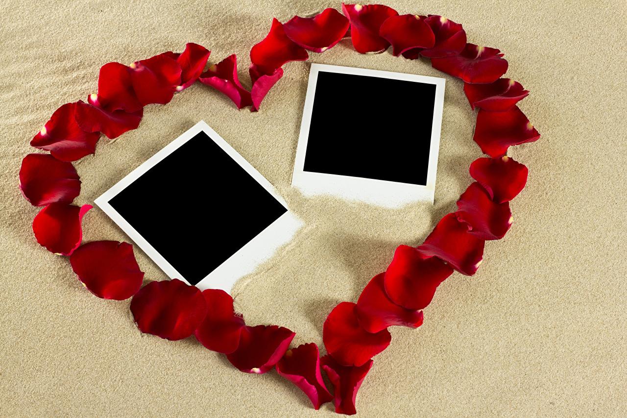 Картинка День святого Валентина Сердце Красный Лепестки цветок Шаблон поздравительной открытки дизайна День всех влюблённых серце сердца сердечко красные красная красных лепестков Цветы Дизайн