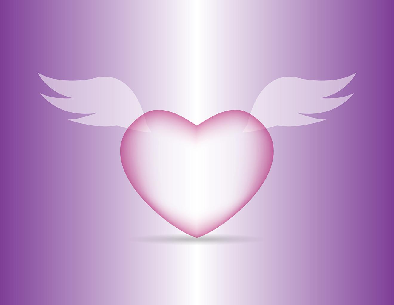 Фото День всех влюблённых сердечко Крылья Цветной фон День святого Валентина Сердце