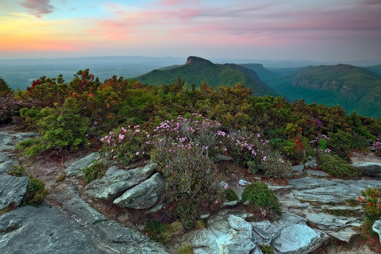 Картинки США Avery North Carolina гора Природа Камни Кусты штаты Горы Камень кустов