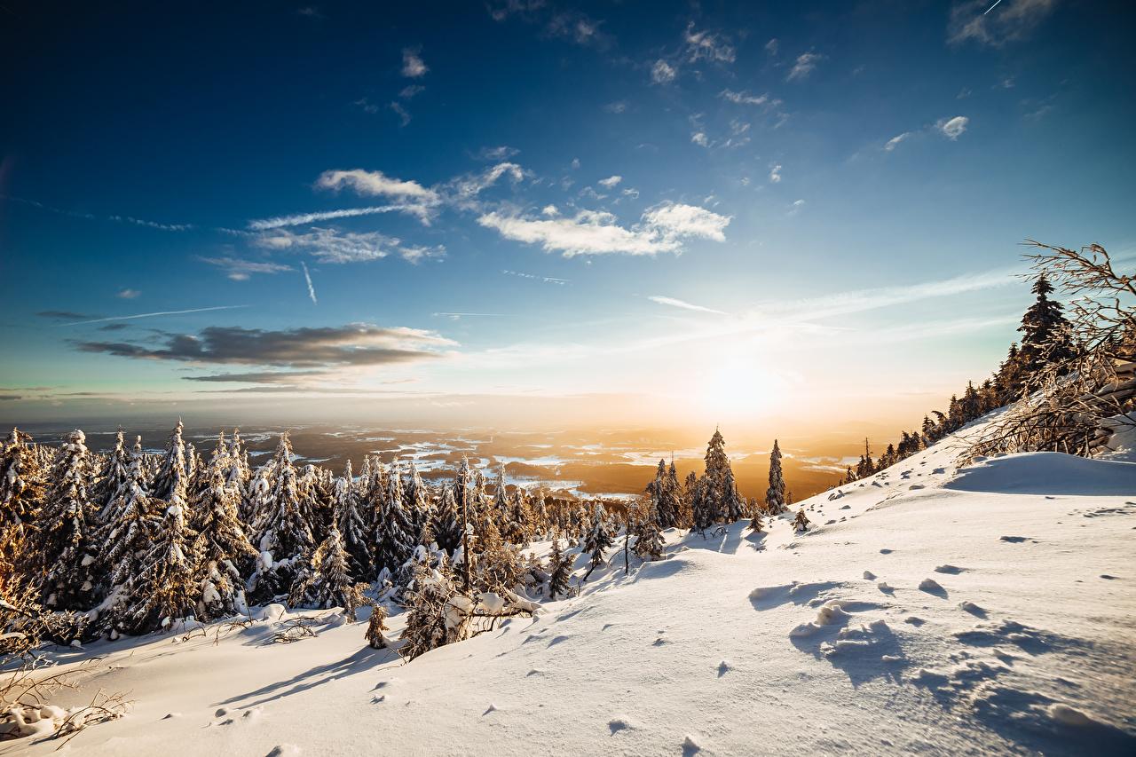 Фотографии Ель зимние Природа Снег Небо Леса Пейзаж Деревья ели Зима лес снеге снега снегу дерево дерева деревьев