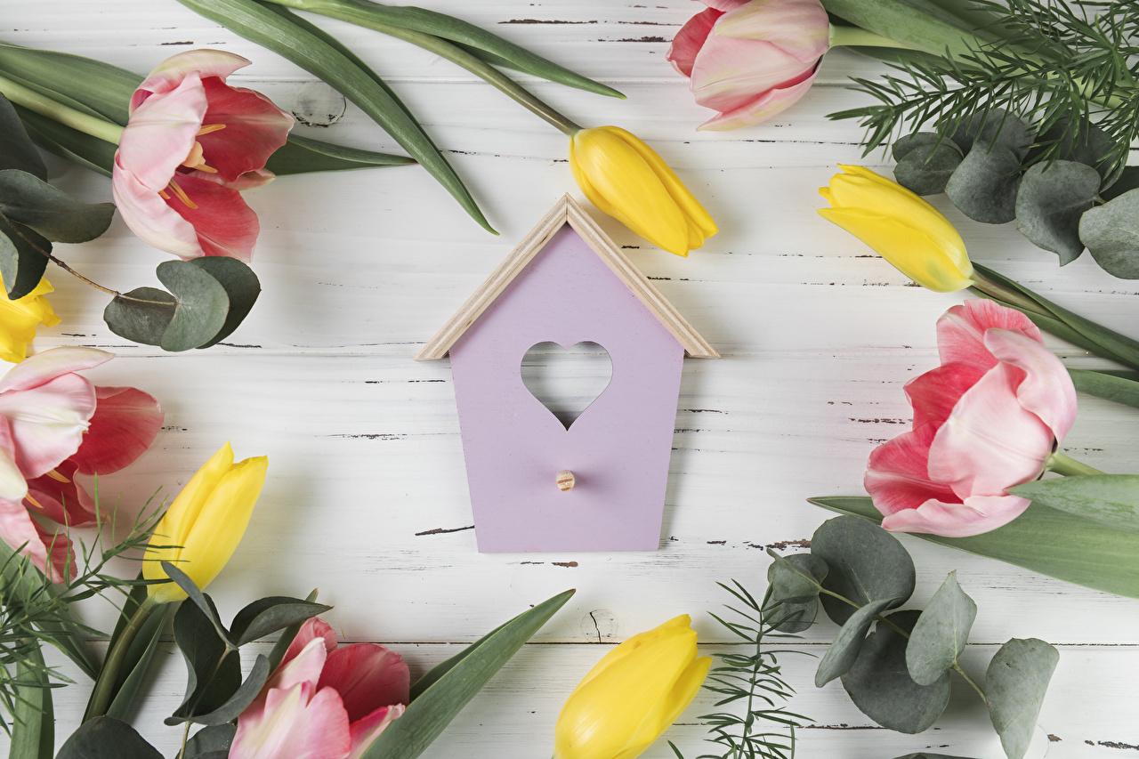 Обои для рабочего стола Сердце тюльпан цветок Доски серце сердца сердечко Тюльпаны Цветы