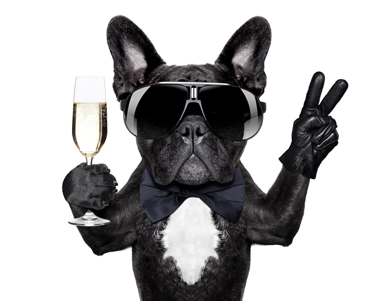 собака парик перчатки очки скачать