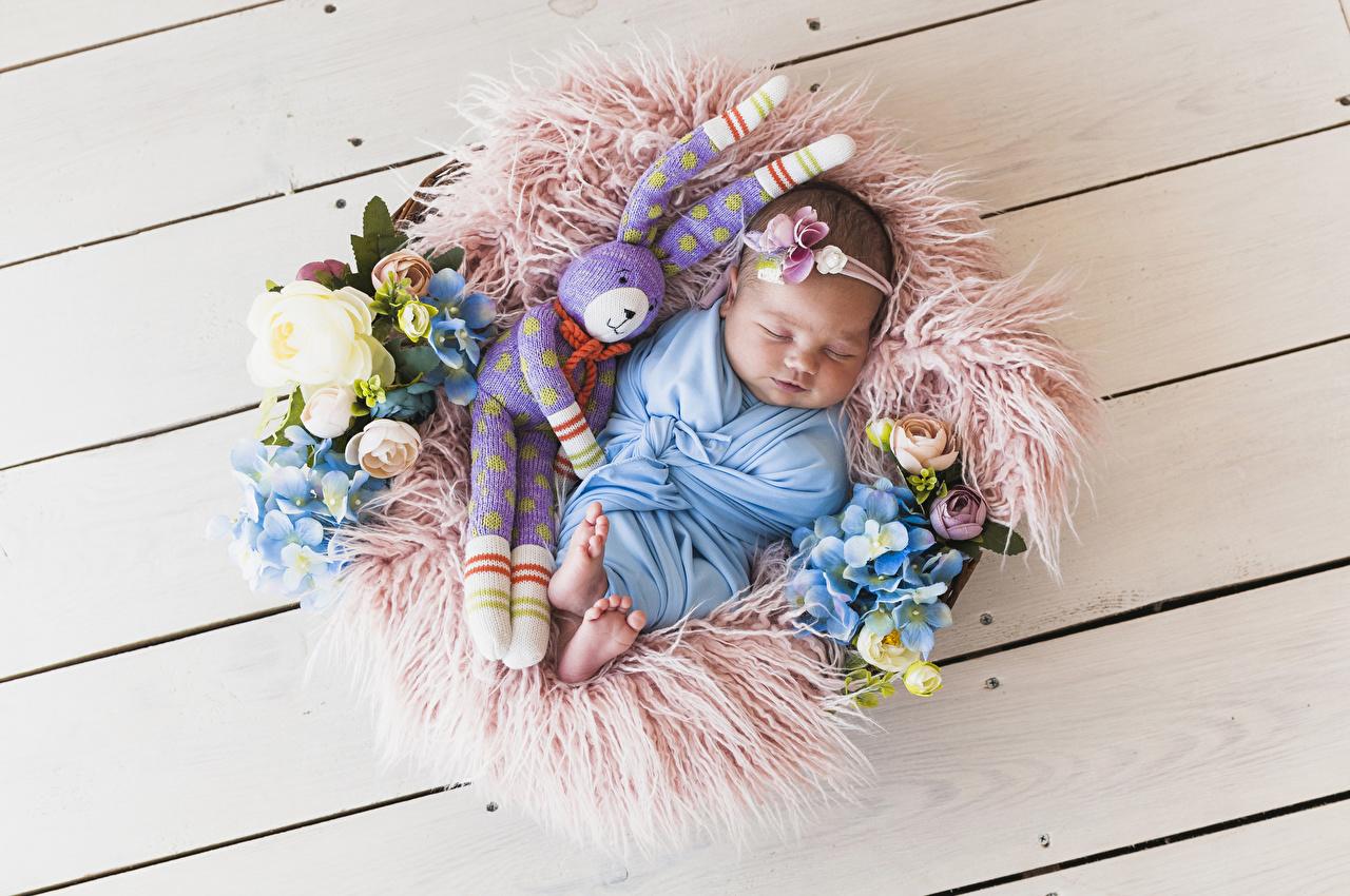 Фотографии Зайцы младенца Дети сон Розы Гортензия Игрушки Доски Младенцы младенец грудной ребёнок ребёнок Спит роза спят спящий игрушка