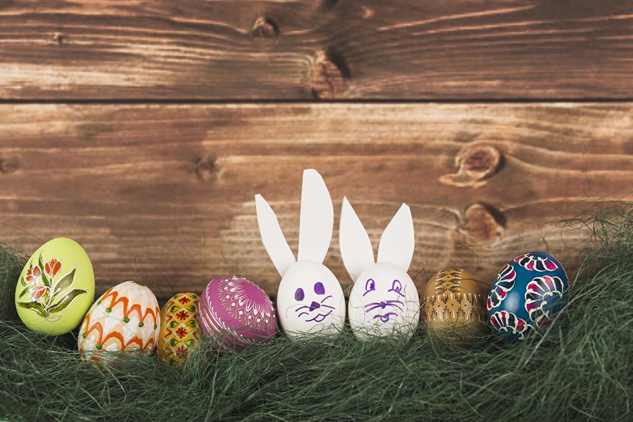 Картинки Пасха Кролики Яйца Трава Праздники Доски