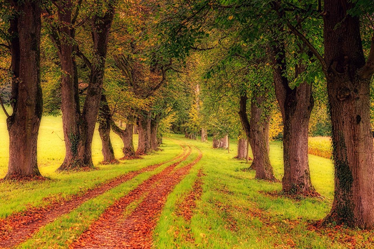 Картинки лист Осень Природа Дороги Трава дерево Листья Листва осенние траве дерева Деревья деревьев