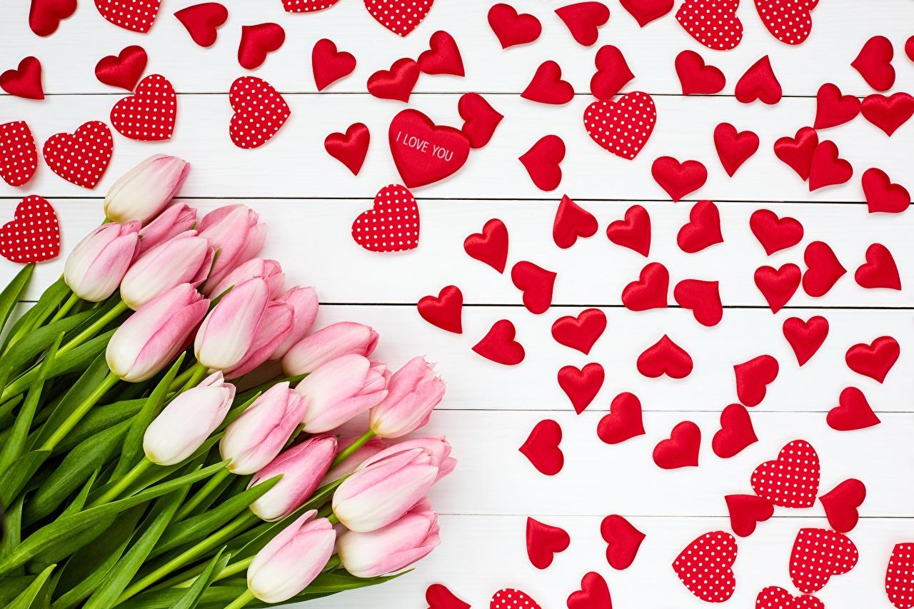 Фотографии День всех влюблённых сердца Розовый тюльпан Цветы День святого Валентина серце Сердце сердечко розовых розовые розовая Тюльпаны цветок