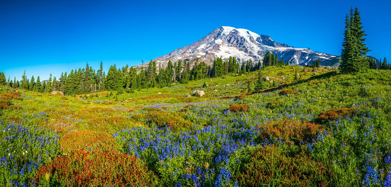 Картинка Вашингтон США панорамная Mount Rainier National Park Горы Природа парк Пейзаж Деревья штаты америка Панорама гора Парки дерево дерева деревьев