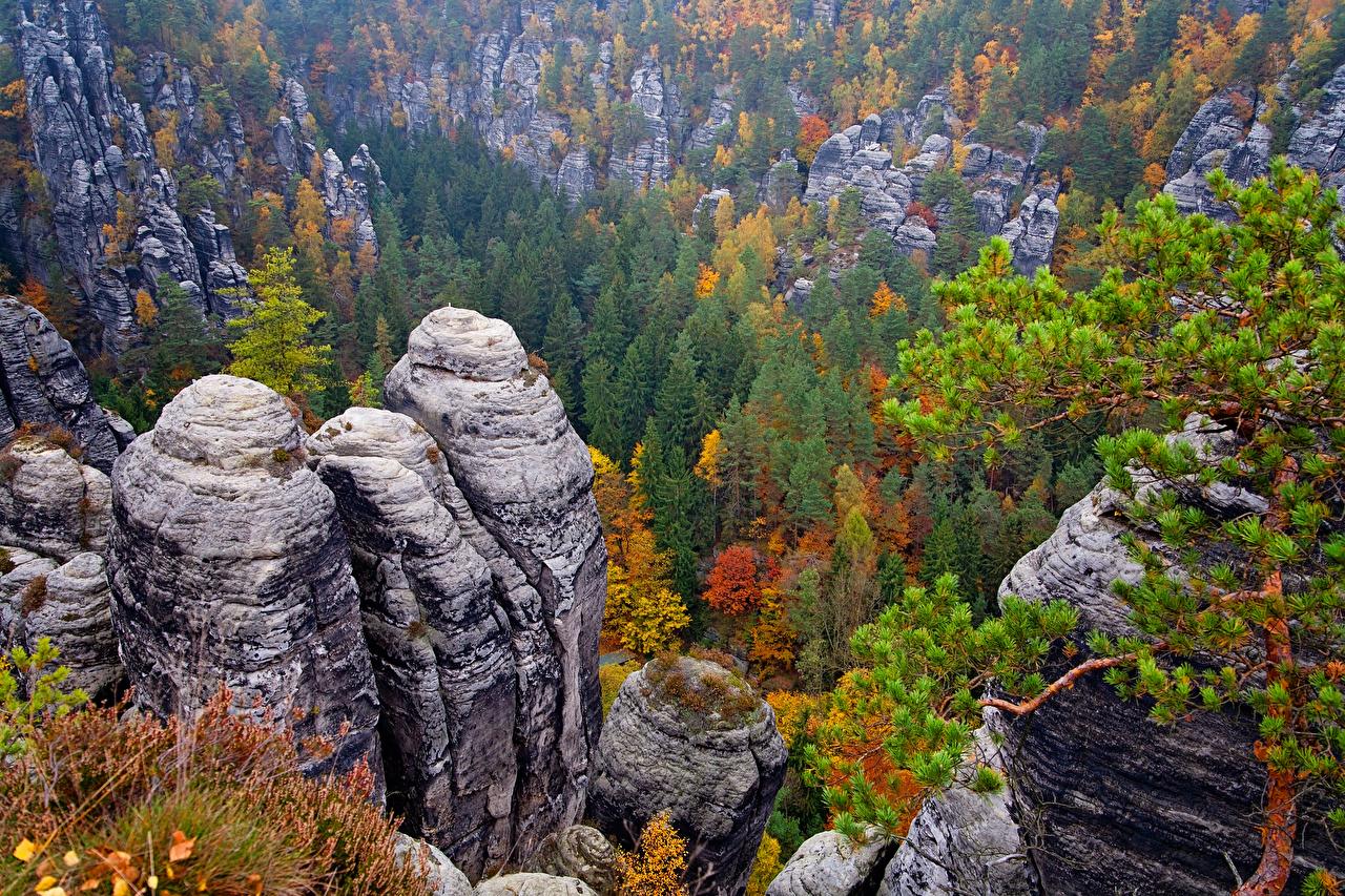 Картинки Германия Saxon Switzerland National Park Утес Осень Природа Парки Пейзаж Деревья Скала осенние
