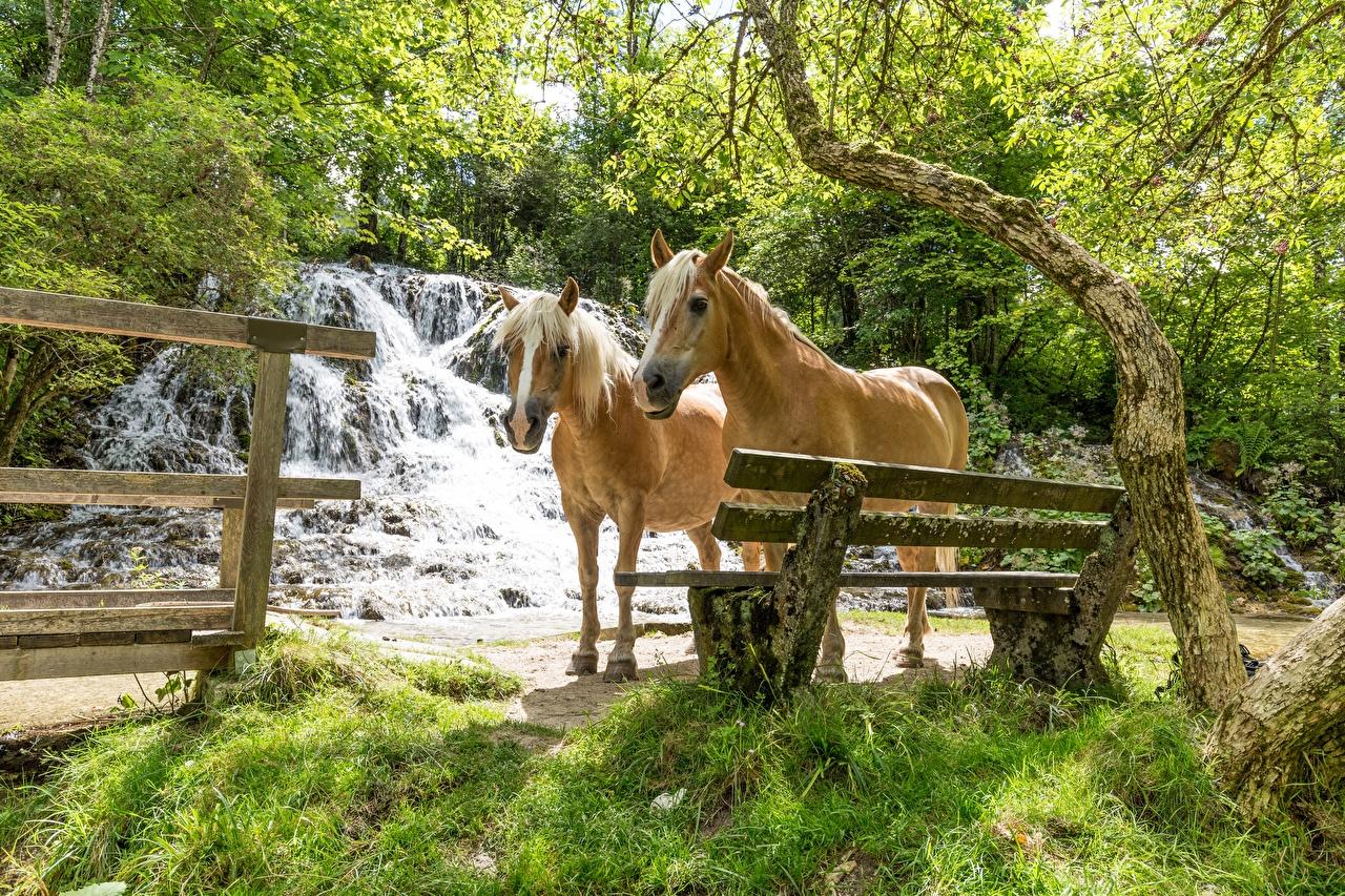 Фото лошадь две Водопады траве Скамья животное Лошади 2 два Двое вдвоем Трава Скамейка Животные