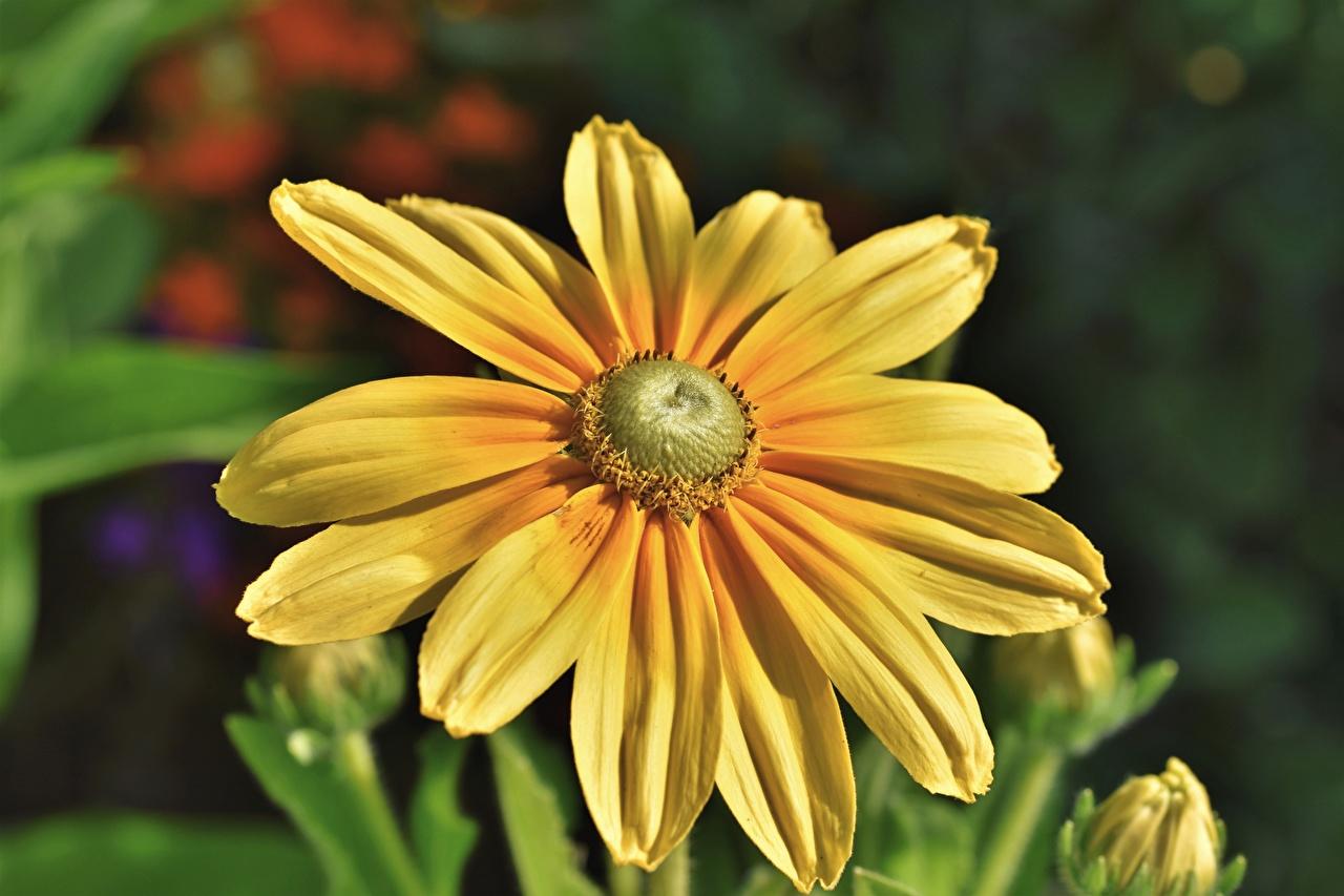 Фотография боке желтые Цветы вблизи Размытый фон желтая Желтый желтых цветок Крупным планом