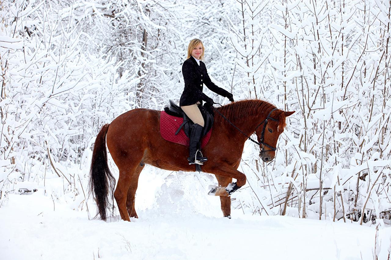 Смотреть фото лошади