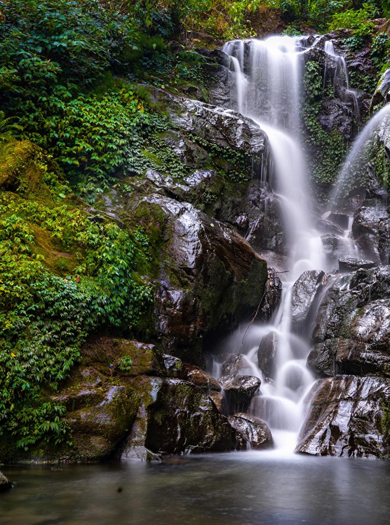 Фотографии скале Природа Водопады Мох на ветке  для мобильного телефона Утес скалы Скала мха мхом Ветки ветка ветвь