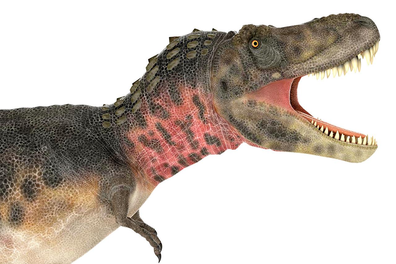 Обои для рабочего стола Динозавры Tarbosaurus side view 3D Графика Зубы Животные Древние животные динозавр 3д животное