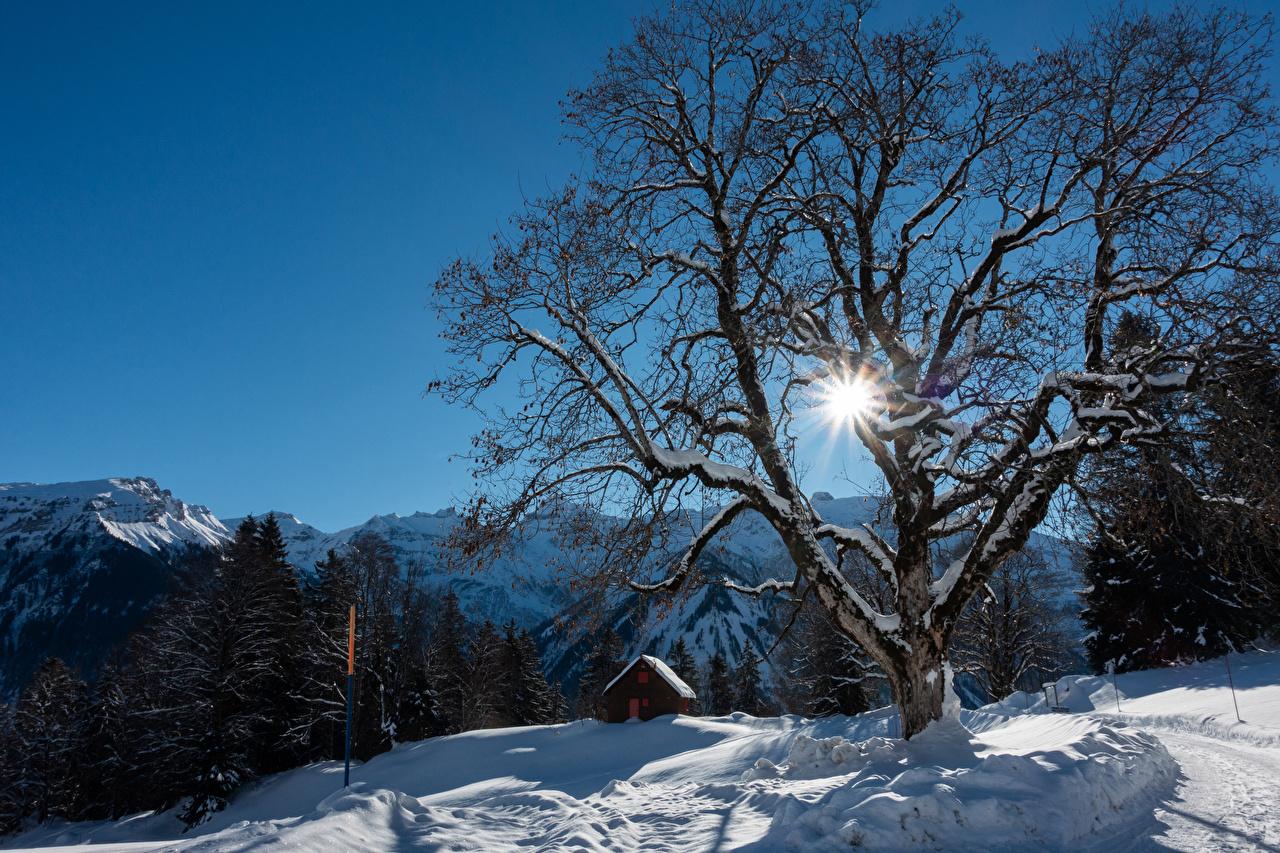 Фото Лучи света Альпы Швейцария Braunwald Зима Горы Природа Снег Здания Деревья зимние Дома