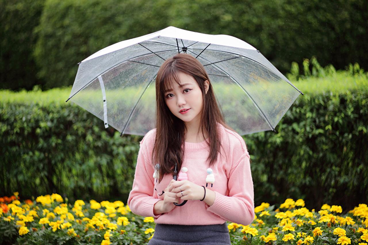 Картинка молодая женщина азиатки свитера зонтом смотрят девушка Девушки молодые женщины Азиаты Свитер азиатка свитере Зонт зонтик Взгляд смотрит
