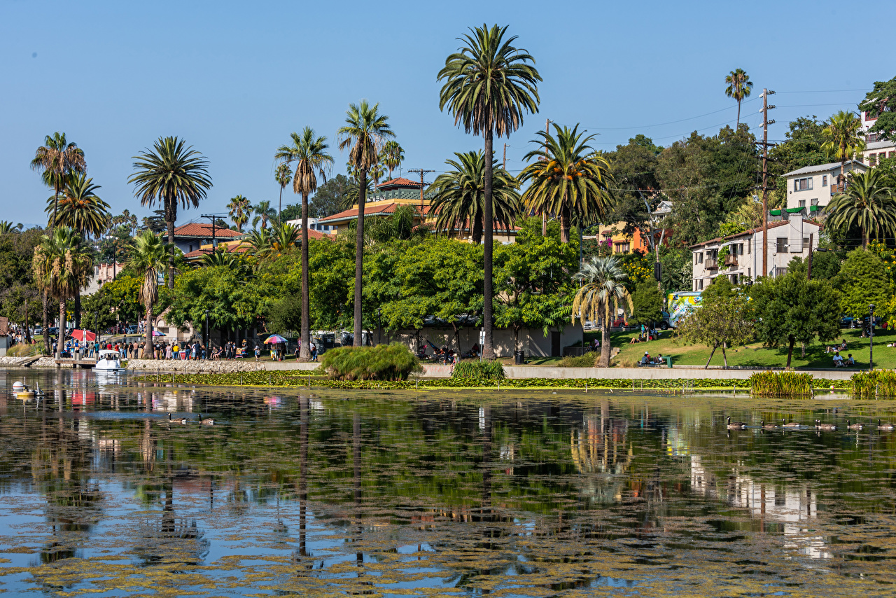 Картинки Калифорния Лос-Анджелес штаты Echo Park Lake Озеро Пальмы Побережье Здания Города калифорнии США америка пальм пальма берег Дома город
