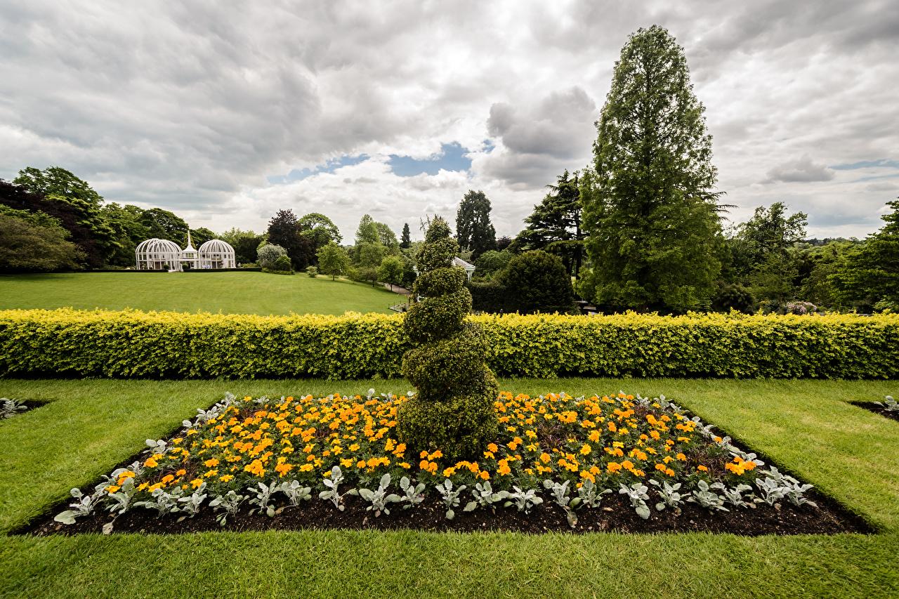 Фотографии Англия Botanical Gardens Birmingham Природа парк Бархатцы газоне Кусты дизайна Парки Газон кустов Дизайн