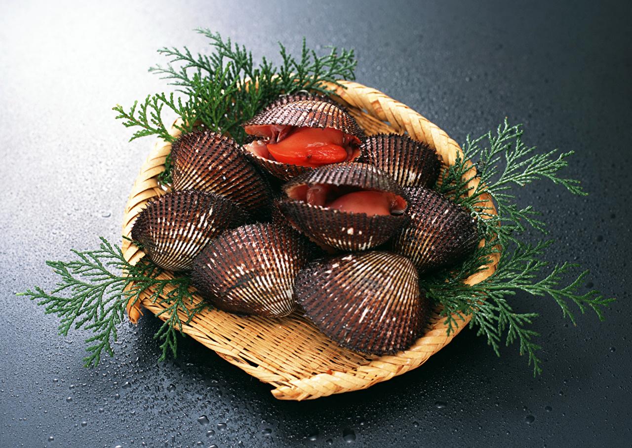Фото Ракушки Корзинка Пища Морепродукты Корзина корзины Еда Продукты питания