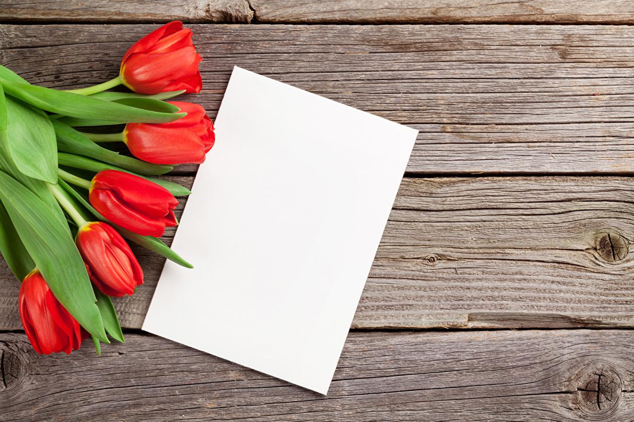 Картинка Лист бумаги Красный Тюльпаны Цветы Шаблон поздравительной открытки Доски