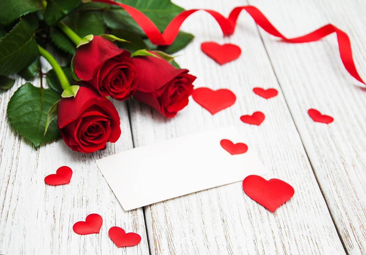 Фотографии сердца роза Красный цветок Лента Доски серце Сердце сердечко Розы красных красная красные Цветы ленточка