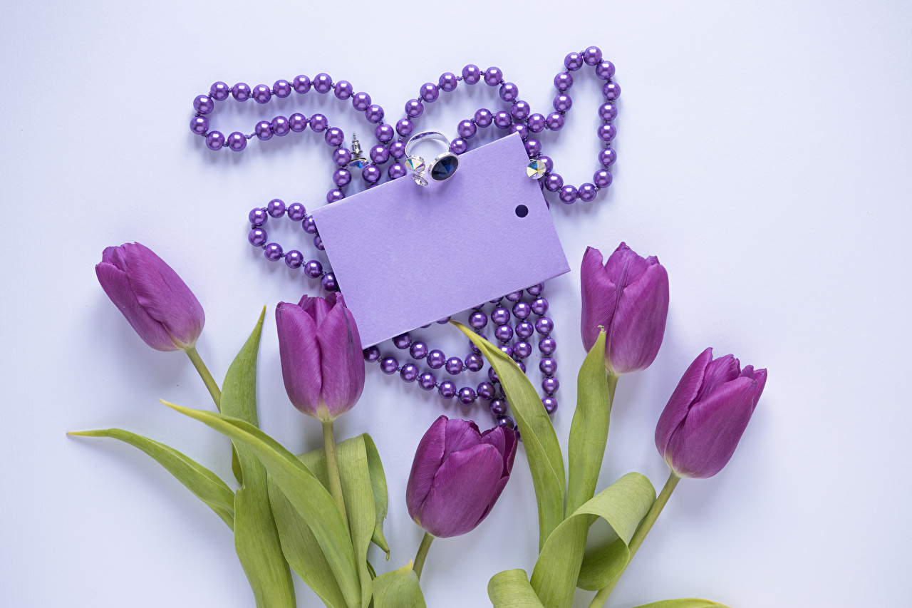 Обои для рабочего стола Тюльпаны Фиолетовый Цветы ювелирное кольцо Шаблон поздравительной открытки Украшения Цветной фон тюльпан фиолетовых фиолетовая фиолетовые цветок Кольцо кольца кольца
