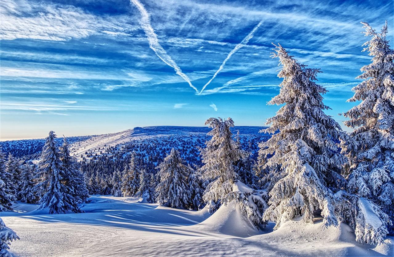 Фото Чехия Jeseníky Mountains Ель Зима Горы Природа лес Небо снега Пейзаж дерево ели гора зимние Леса Снег снегу снеге дерева Деревья деревьев