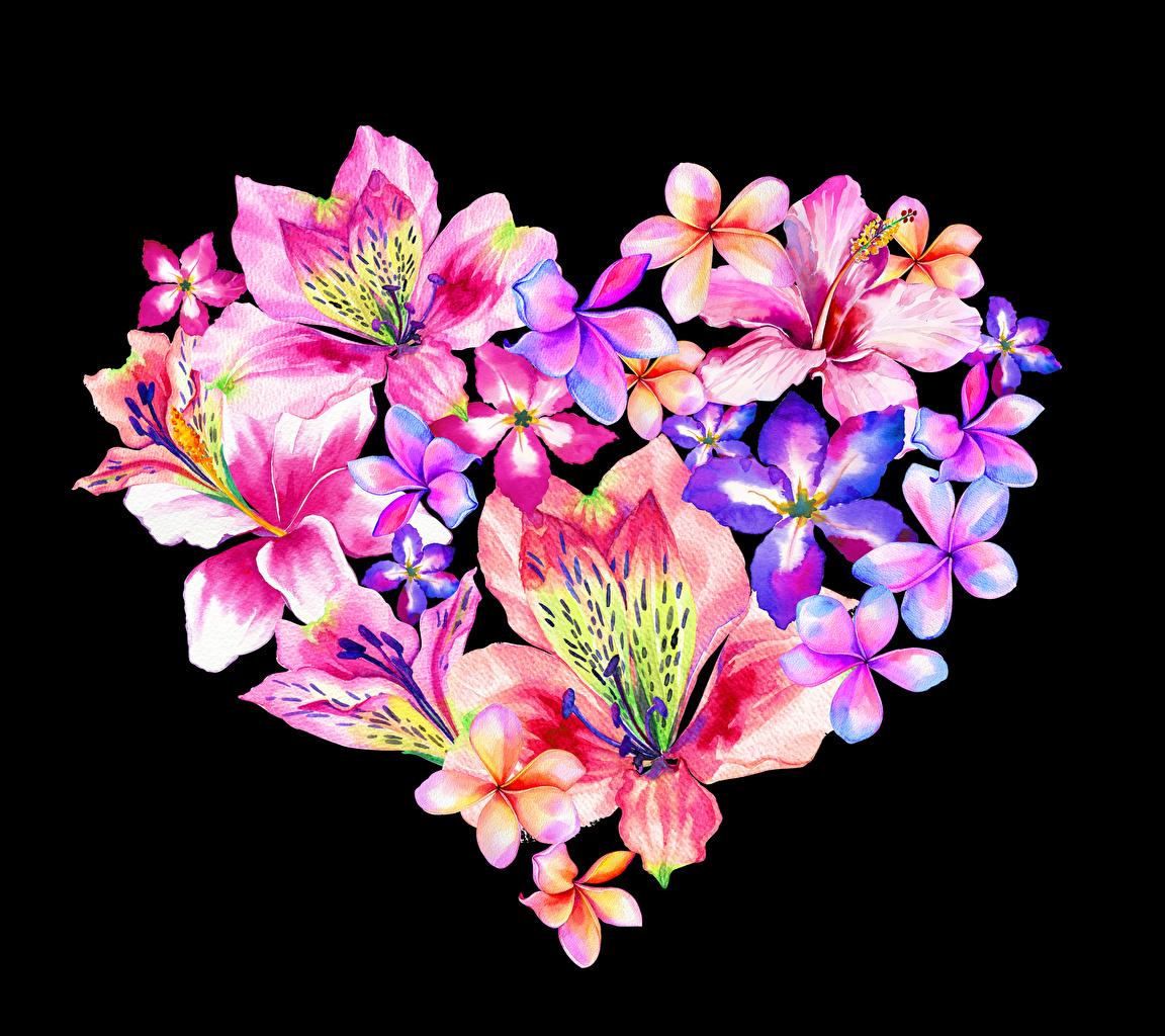 Картинки День всех влюблённых сердца Цветы Плюмерия Альстрёмерия Черный фон дизайна День святого Валентина серце Сердце сердечко цветок на черном фоне Дизайн
