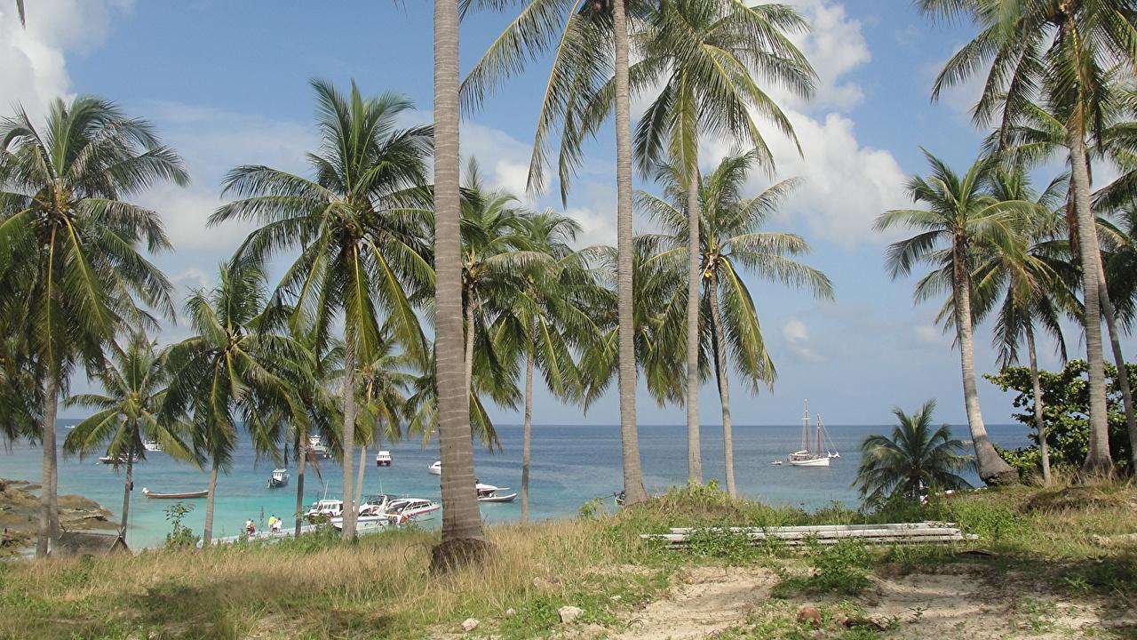 Фотография Таиланд Море Природа пальм тропический Побережье Пальмы пальма Тропики берег
