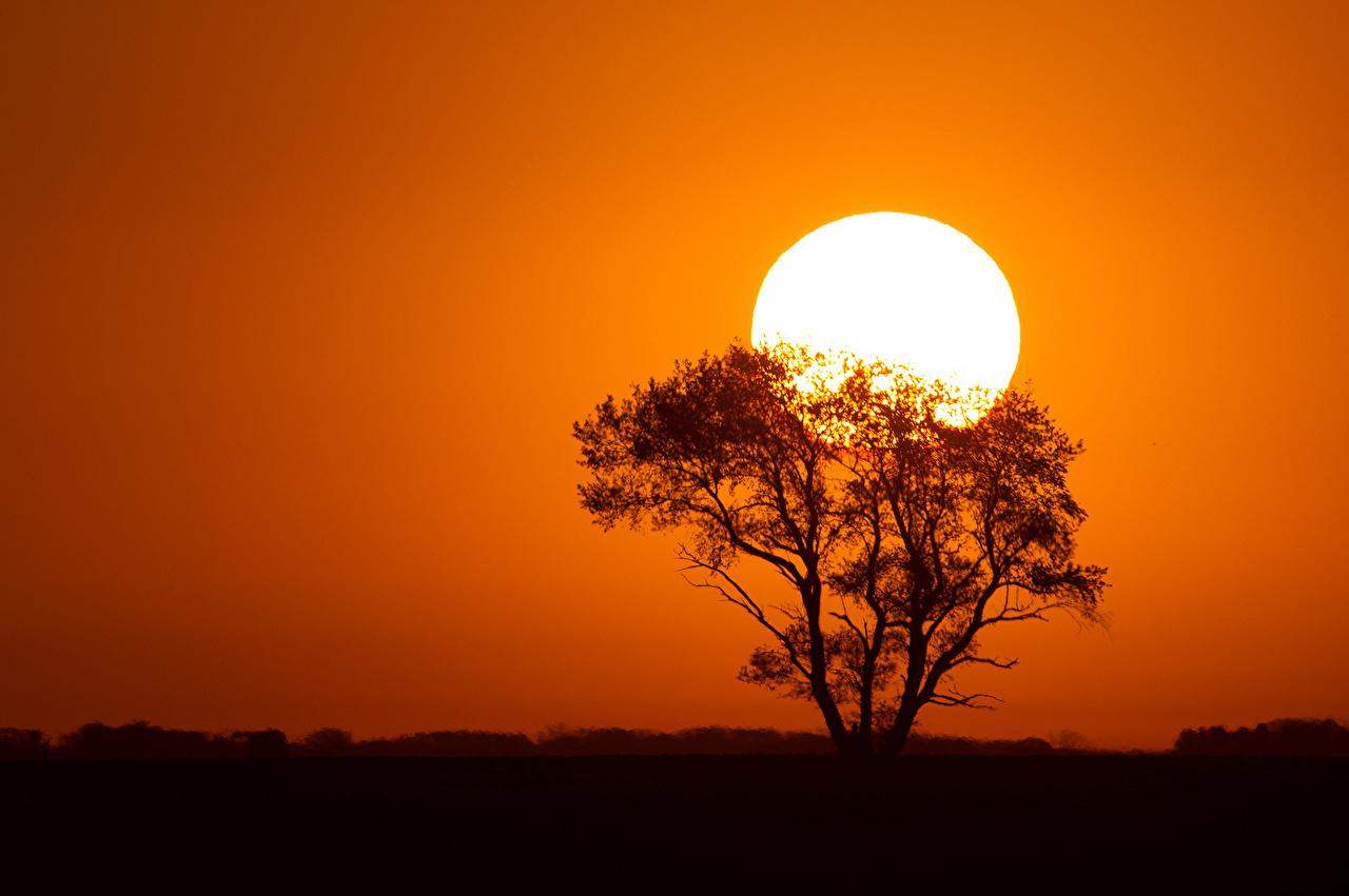 Картинка Силуэт солнца Природа Рассветы и закаты дерева силуэты силуэта Солнце рассвет и закат дерево Деревья деревьев