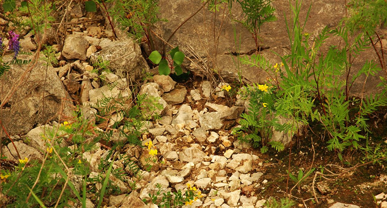Фотография Камень вблизи Камни Крупным планом