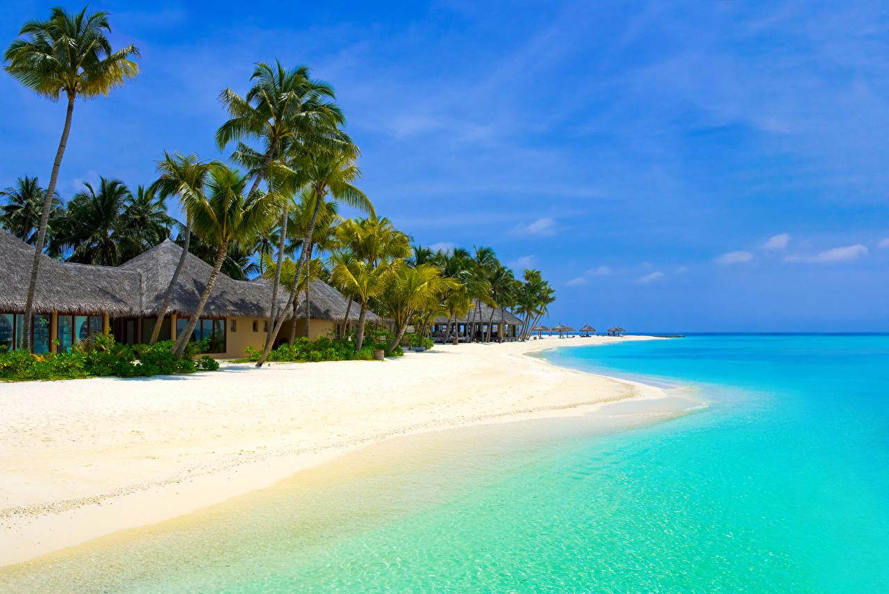 Фотография Бунгало Пляж Природа Пальмы Тропики берег Здания Побережье Дома