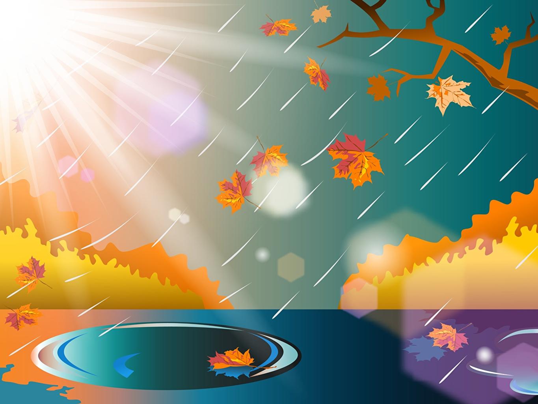 Картинка Листья Осень Солнце Природа Лужа Дождь ветка Векторная графика лист Листва солнца осенние лужи ветвь Ветки на ветке