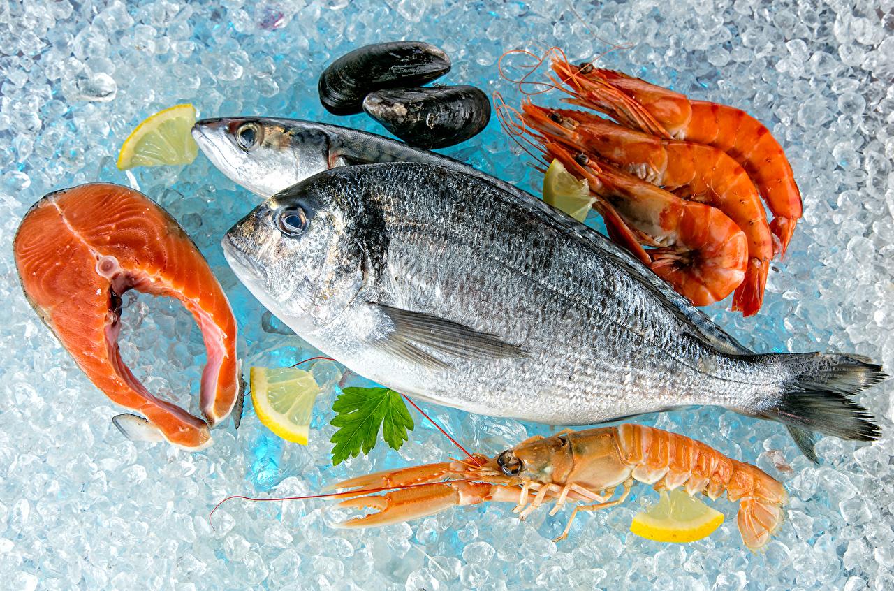 Фотография Лед Рыба Лимоны Креветки Пища Морепродукты