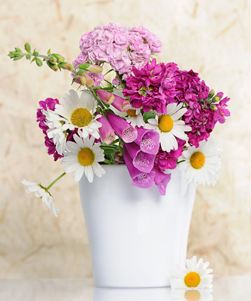 Обои Букеты Цветы Ромашки Маттиола Гвоздики Ваза Левкой