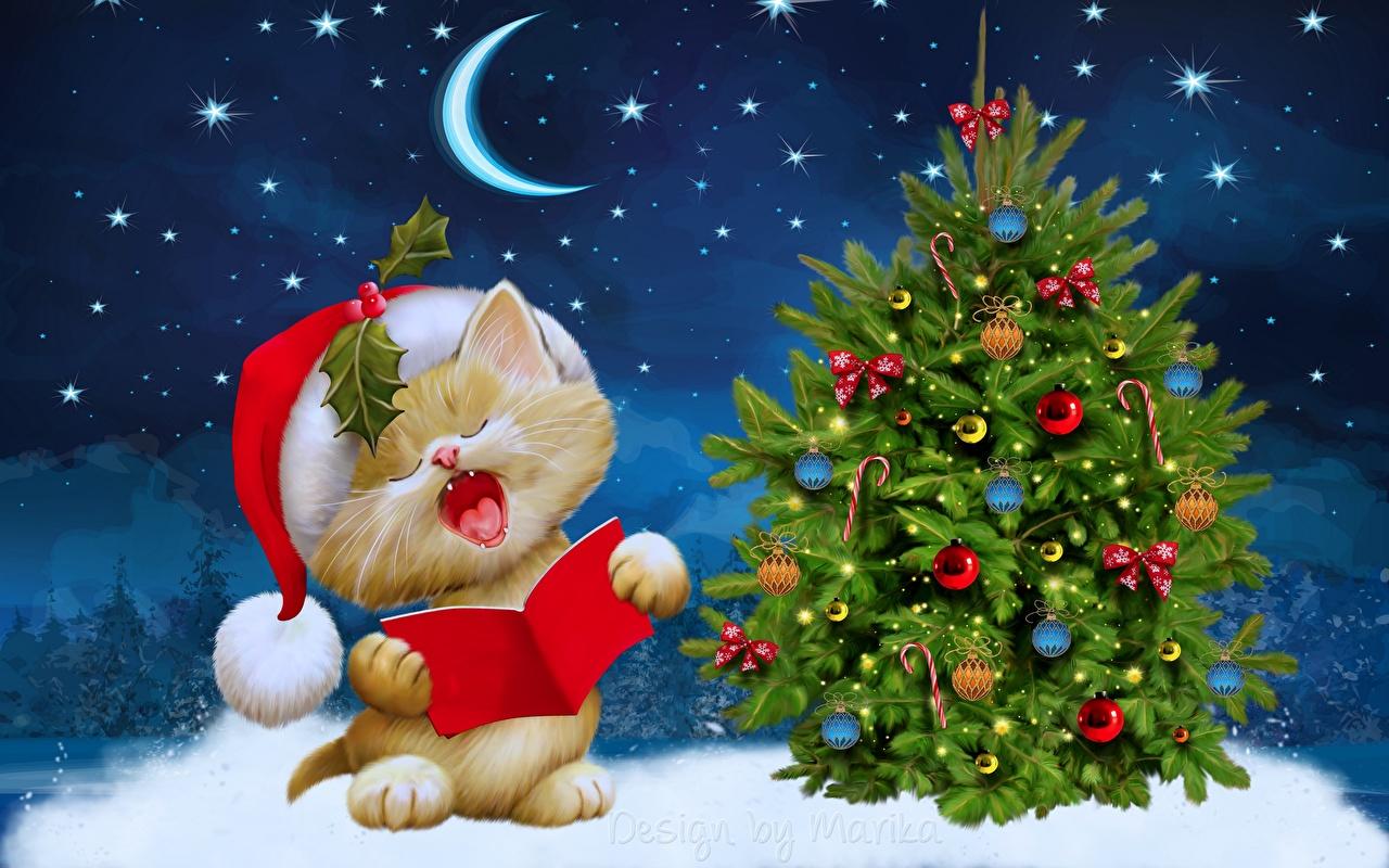 Фото кот Звезды Рождество Шапки Новогодняя ёлка лунный серп коты Кошки кошка Новый год Елка шапка в шапке Полумесяц