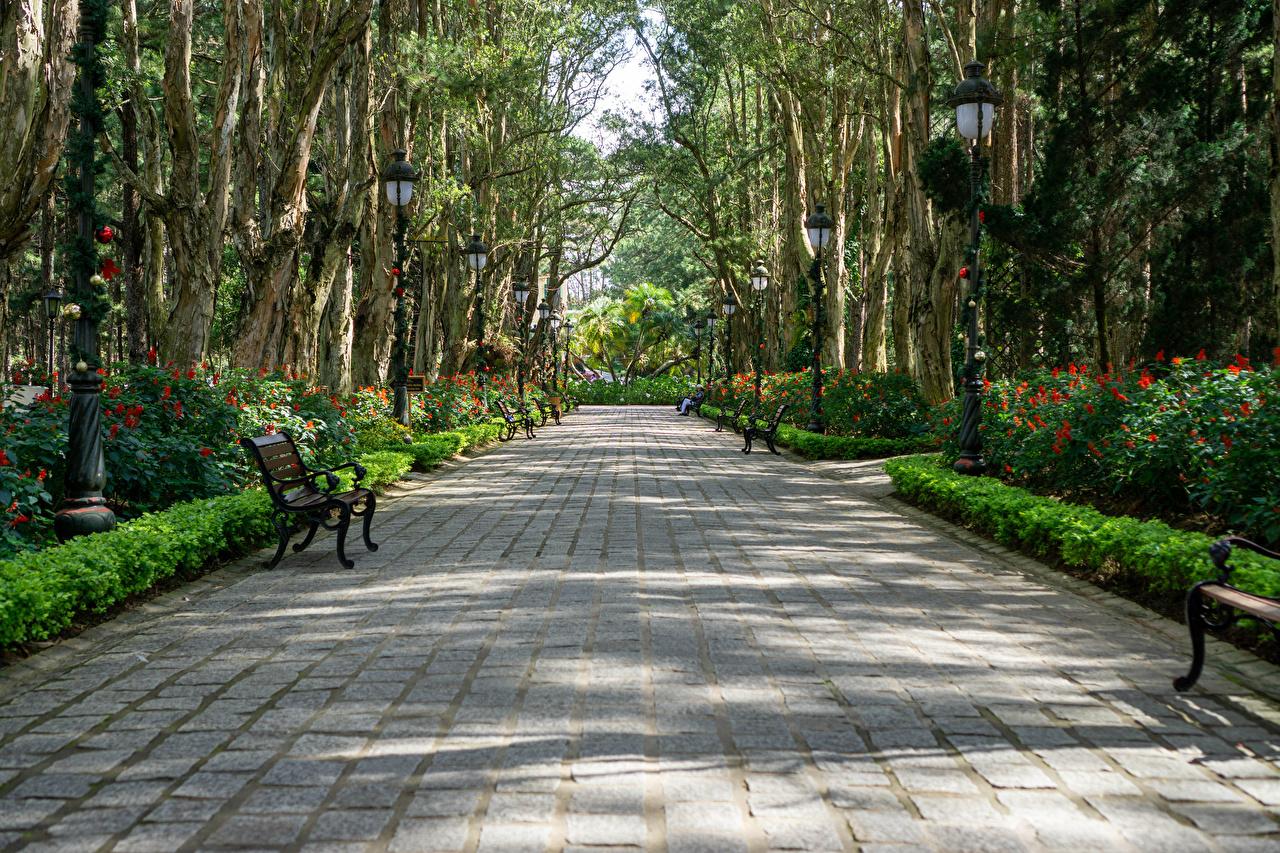 Картинки Вьетнам Park Bao Dai King Palace in Da Lat Аллея Природа парк Скамья Кусты дерева аллеи Парки Скамейка дерево кустов Деревья деревьев
