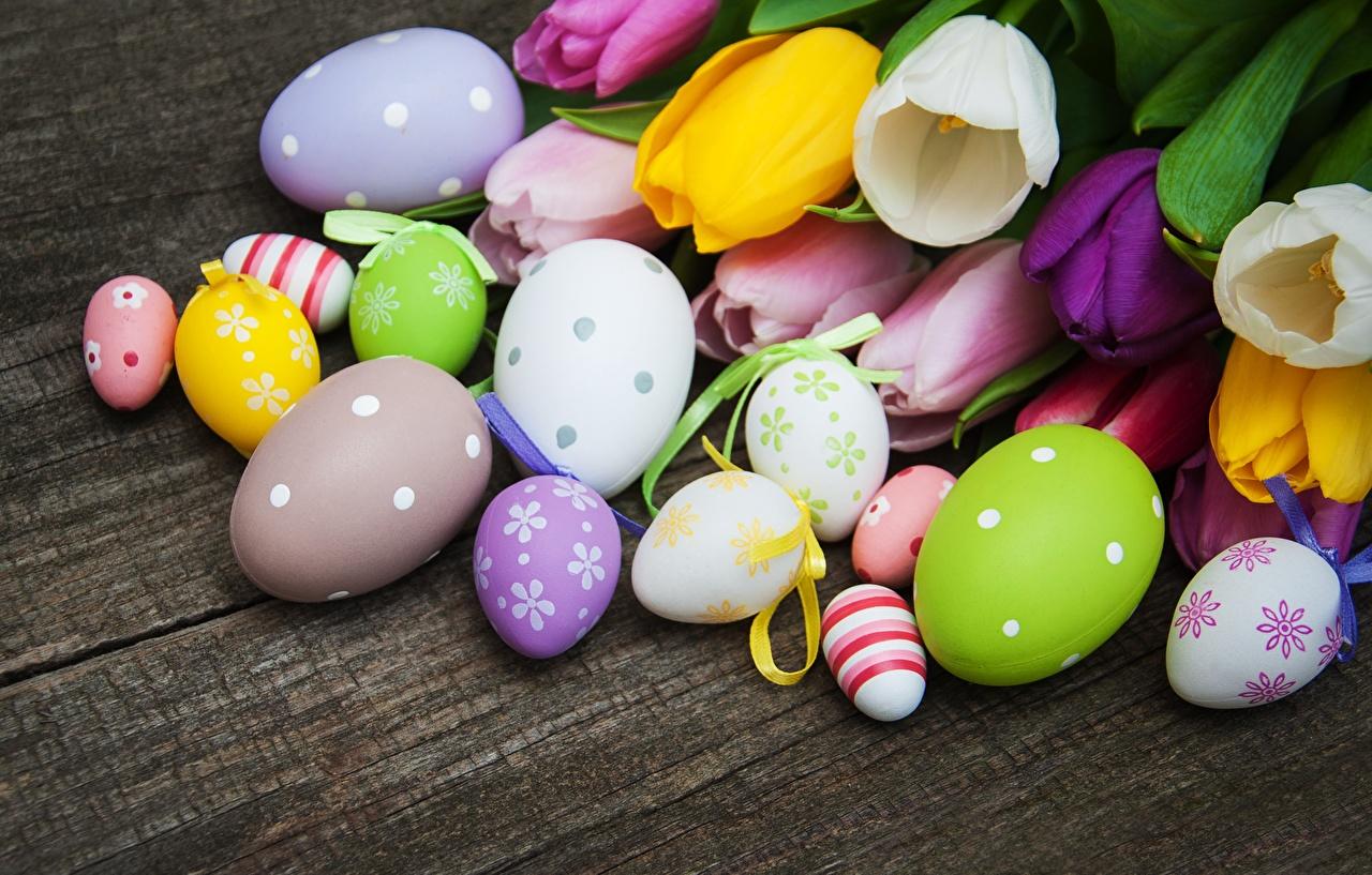 Картинка Пасха Яйца Тюльпаны Цветы яиц яйцо яйцами тюльпан цветок
