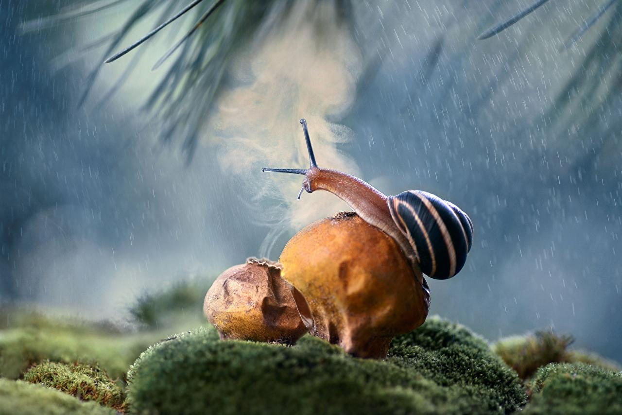 Картинки Улитки Дождь вблизи животное Животные Крупным планом