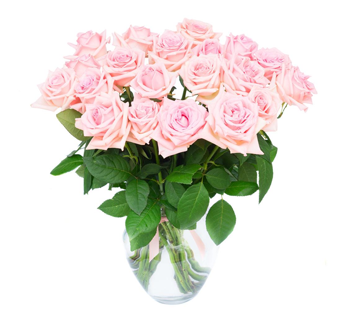 Картинка букет Розы розовых цветок вазе белом фоне Букеты роза розовая розовые Розовый Цветы Ваза вазы Белый фон белым фоном