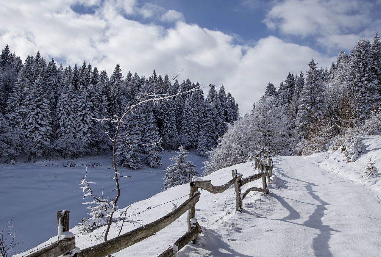 Фотографии Италия Alta Badia Ель Зима Природа Леса Снег Забор Дороги ели зимние лес снега снегу снеге ограда забора забором