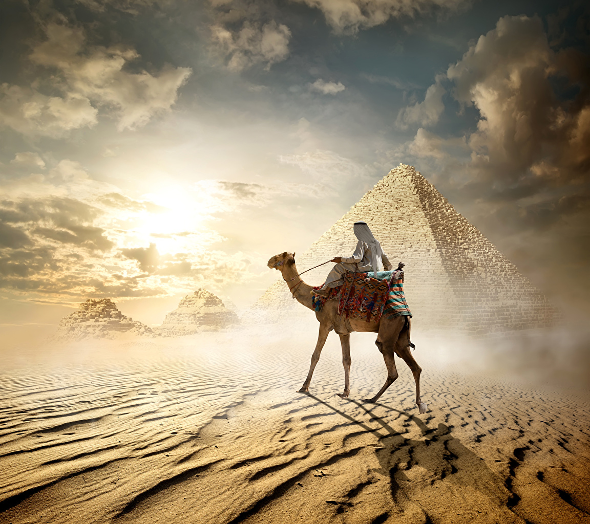 Фотографии Верблюды Египет Cairo Пустыни Пирамида животное верблюд пустыня пирамиды Животные
