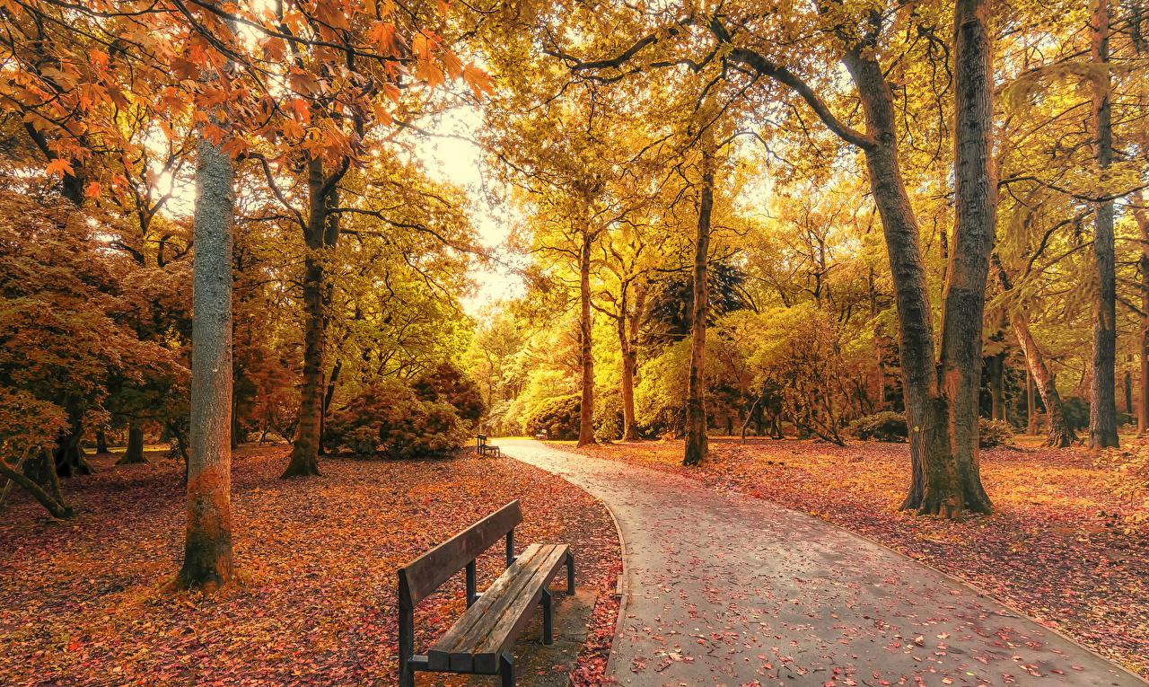 Фото Природа Великобритания Уэльс Осень Парки Скамейка дерево осенние парк Скамья дерева Деревья деревьев