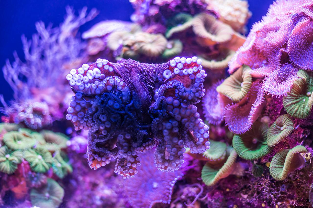 Картинка Подводный мир Кораллы Животные животное