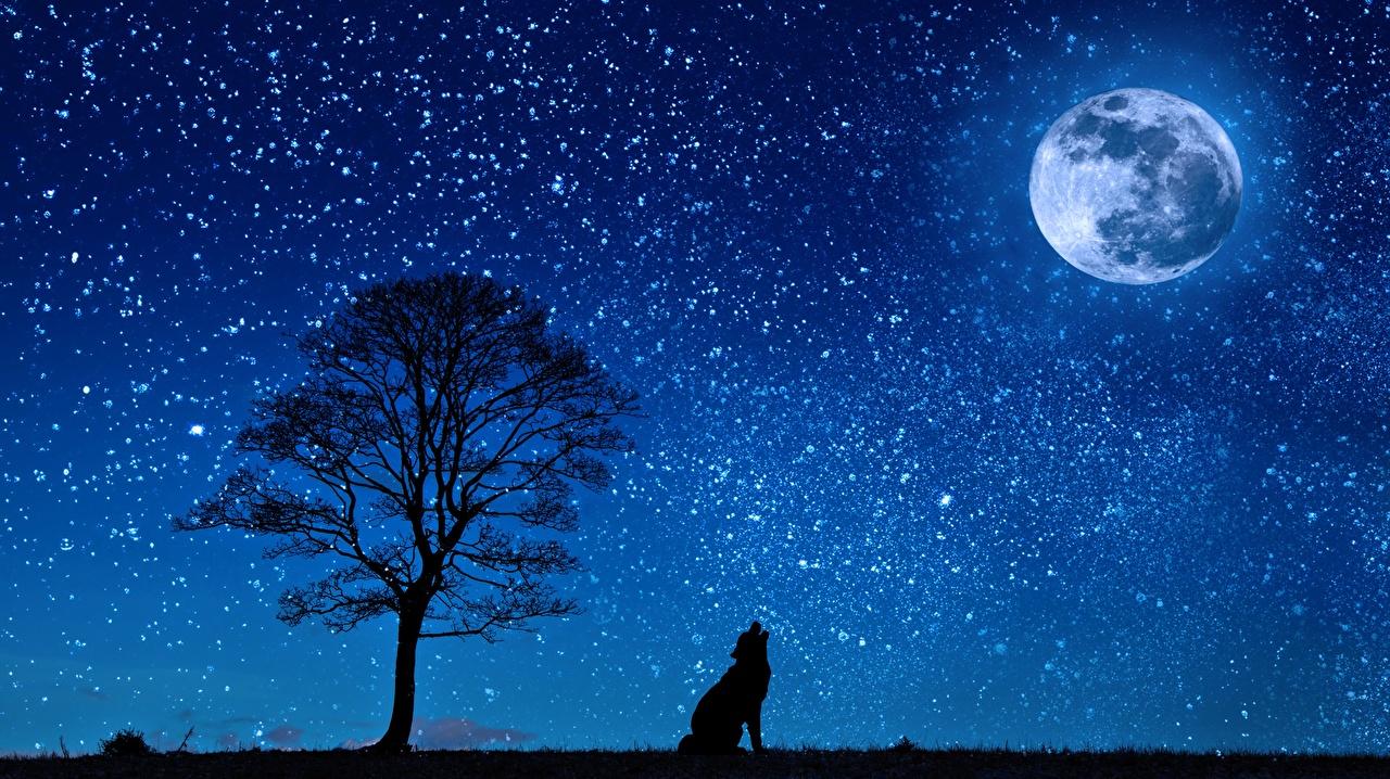 Картинки Волки Силуэт Природа Луна Ночь Деревья Ночные