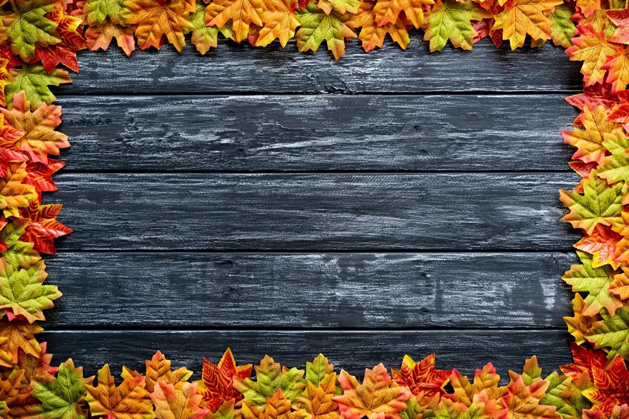 Фотографии Листья Клён Осень Шаблон поздравительной открытки Доски лист Листва клёна клёновый осенние