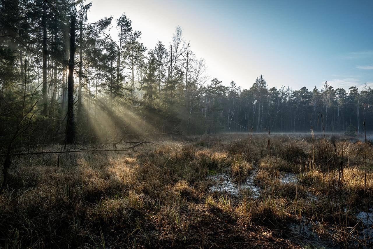 Фотография Лучи света Германия Grossdittmannsdorf, Saxony Природа Леса Болото Деревья лес болоте болотом дерево дерева деревьев