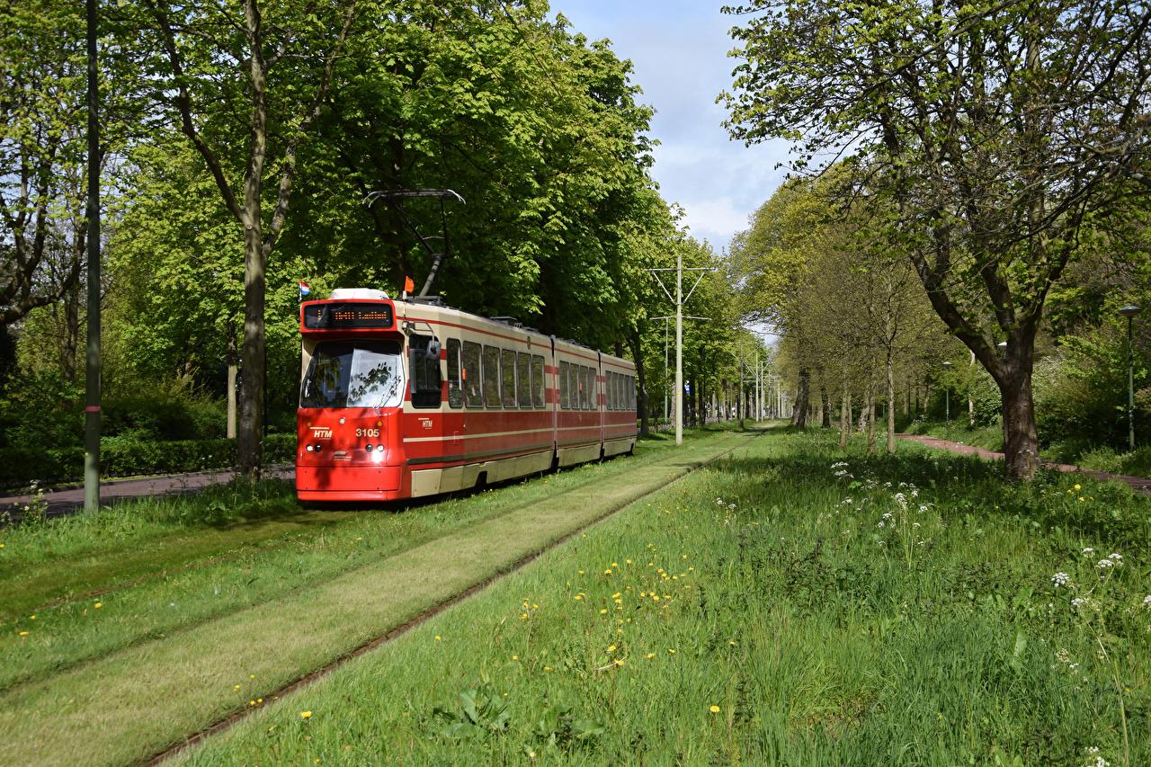 Картинка Природа голландия Trams in The Hague Трамвай Трава Железные дороги Деревья Нидерланды траве дерево дерева деревьев