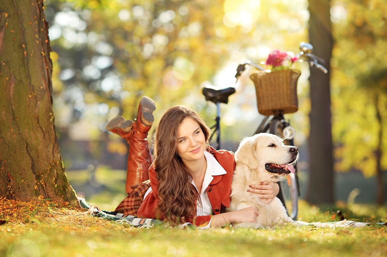 Картинки Золотистый ретривер собака шатенки лежа боке Велосипед девушка Трава Собаки Шатенка Лежит лежат лежачие Размытый фон велосипеды велосипеде Девушки молодая женщина молодые женщины траве
